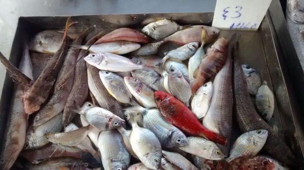 marsaxlokk fish